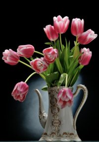 Tulipes,Mercues